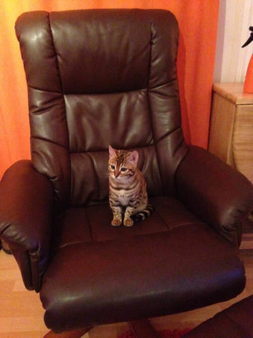 Millie as a kitten in the manchair